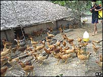 A Vietnamese farmer - who has lost 900 chickens to the bird flu - disinfects the rest of his stock