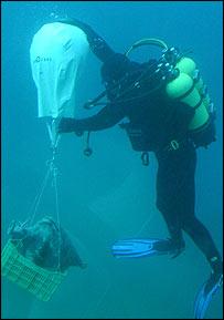 Diver, Wachsmann
