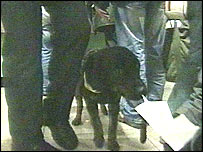 Drugs sniffer dog