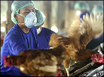 Workers from Thai livestock department catch chickens