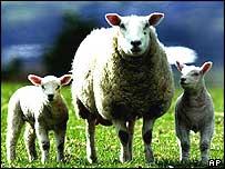 Generic sheep