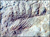 Fossil close-up
