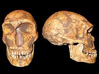 La Ferassie skull, BBC