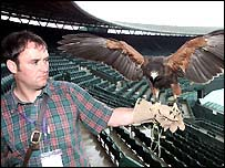 Mr Davis with his Harris Hawk at Wimbledon's Centre Court