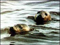 Exxon Valdez spill