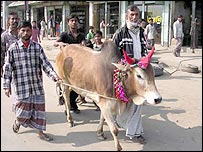 Cow in Dhaka street