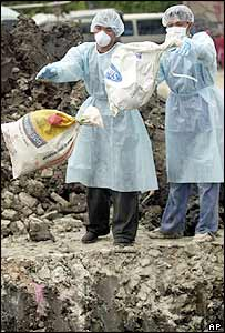 Thai workers throw bags containing chickens into a dump in Bangkok