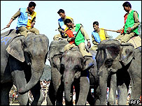 Elephants play football with riders perched on their backs in Kaziranga National Park