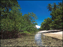 Mangrove forest, Adamaqua