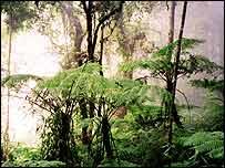 Malaysian tree ferns   L A Bruijnzeel