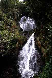 Cloud forest waterfall, Ecuador   P Bubb