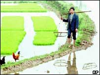 Farmer in a paddy field