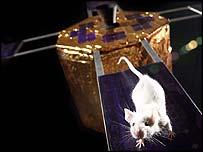 Кандидат в мышиные космонавты