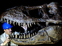 Museum engineer John Phillips working on the head of the T Rex dinosaur model