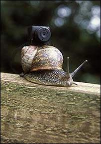 Snail, BBC