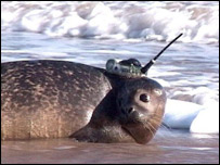 Seal with tracker device