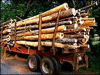 Logs on a trailer