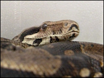 Snake inside polystyrene box