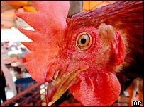 Chicken at a market in Kuala Lumpur, Malaysia