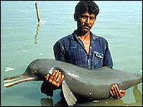 A rescued river dolphin