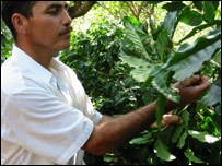 A Fairtrade coffee picker, picture courtesy of the Fairtrade Foundation