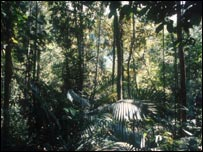 Selva amaz�nica
