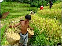 Rice farmers in Shandi village, Yunnan province, China.