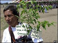 Coca grower, Peru