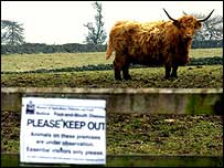 Highland cow and Keep Out sign   PA