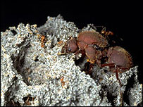 Leafcutter ant garden, Earth birthday project