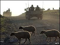Северный Ирак: солдаты по своим делам, овцы - по своим