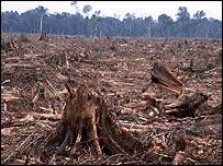 Forest in Sumatra, WWF