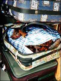 Dead antelope in suitcase   Bushmeat Campaign