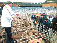 Sheep auction
