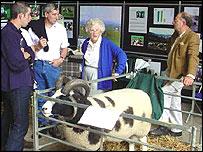 Examining rare breeds in Malvern
