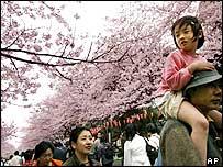 Cherry blossom in Tokyo's Ueno Park (file photo)