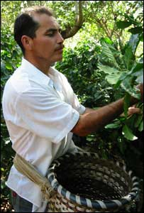 A Fairtrade coffee picker. Image courtesy of the Fairtrade Foundation