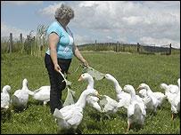 Retired school teacher Kazimiera Mogila with geese