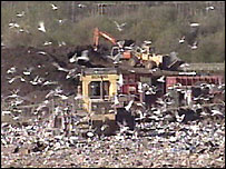 Seagulls at landfill site