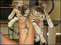 Clone cat