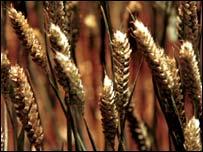 Generic crops