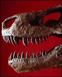 Tyrannosaurus rex, Field Museum