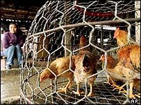 Venta de pollos en Vietnam