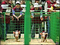 Spectators cheer as piglets race at Russian pig derby in Moscow