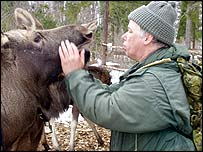 Man stroking elk