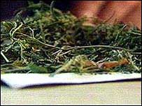 Image of cannabis