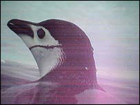 Penguin, Biology Letters