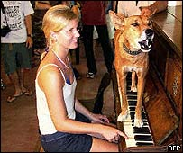 Dinky the singing dingo