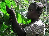 Tanzanian butterfly farmer