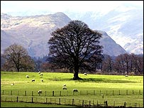 Sheep graze in the Lake District